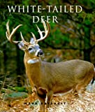 White-Tailed Deer 2007, Mark Raycroft, 1552093751
