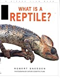 What Is a Reptile?, Robert Snedden, 0871564939