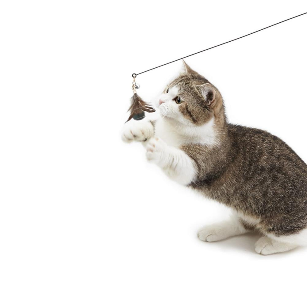 PLHF Pluma natural para mascotas Juguetes para mascotas Productos de madera alargada Gatos divertidos Juguetes para gatos: Amazon.es: Deportes y aire libre