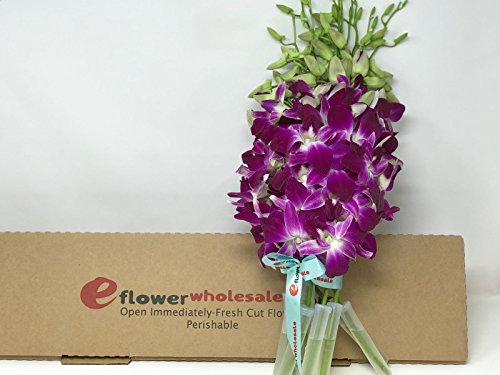 Fresh Cut Flowers -Dendrobium Orchids Bom Sonia (Purple) by eflowerwholesale