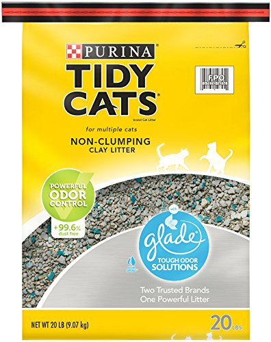Cleaning Up Cat Litter On Carpet