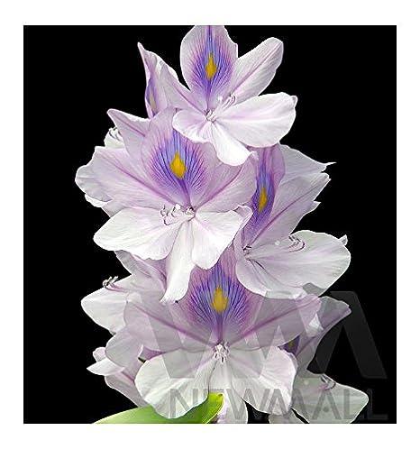 Perfume de Mujer Yodeyma TEMIS Eau de Parfum SPRAY de 100 ml. (Olympea Paco Rabanne-): Amazon.es: Belleza