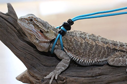 Adjustable Reptile Leash Harness Great for Reptiles or Small Pets 100% Adjustable One Size Fits Most (6 Feet, Neon Blue)