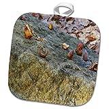 3dRose TDSwhite – Rock Photos - Broken Acorns Rock - 8x8 Potholder (phl_281882_1)
