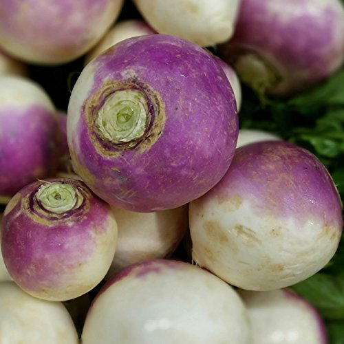 Turnip Garden Seeds - Purple Top White Globe - 1 Lb - Non-GMO, Heirloom Vegetable Garden & Microgreens Seeds