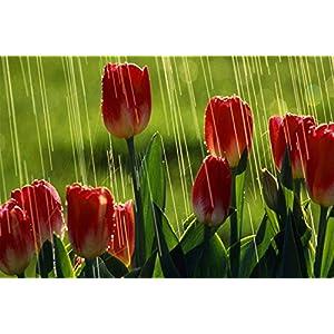 Forin Puzzle Jigsaw 1000 Pezzi Fai Da Te Di Puzzle In Legno Tulipani Sotto La Pioggia Puzzle Gioco Regalo Di Giocattoli Per Adulti E Bambini 75x50cm