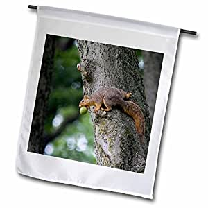 Danita Delimont - Squirrels - Fox squirrel with walnut in Defiance Ohio - US36 CHA0007 - Chuck Haney - 12 x 18 inch Garden Flag (fl_93358_1)
