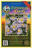 Everwilde Farms - 2000 Fleabane Daisy Native Wildflower Seeds - Gold Vault Jumbo Seed Packet