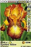 """Iris Germanica Schwertlilie/Bartiris"""" spotted yellow"""""""