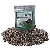 100 Moringa Also Known as drumstick Tree Moringa Organic Seeds ~Chris's Garden