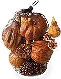 Boston International Decorative Harvest Bag, Medium, Assortment