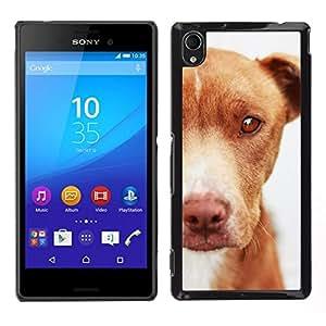 // PHONE CASE GIFT // Duro Estuche protector PC Cáscara Plástico Carcasa Funda Hard Protective Case for Sony Xperia M4 Aqua / Mutt Mongrel Dog Brown Canine /