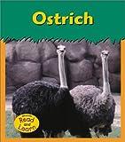 Ostrich, Patricia Whitehouse, 1403405433