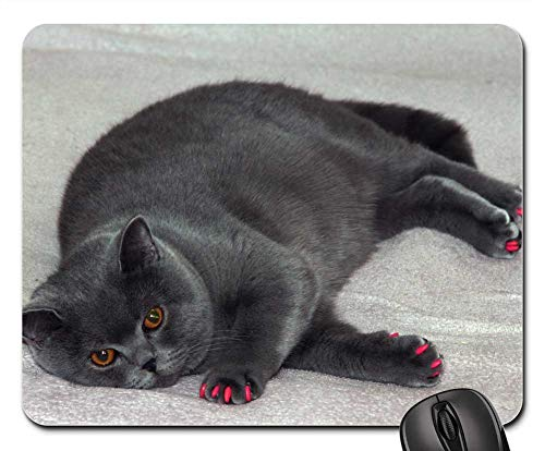 Mouse Pads - British Cat Gray Cat Fat Cat Cat Manicure