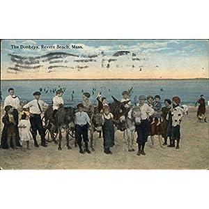 The Donkeys Revere Beach, Massachusetts Original Vintage Postcard