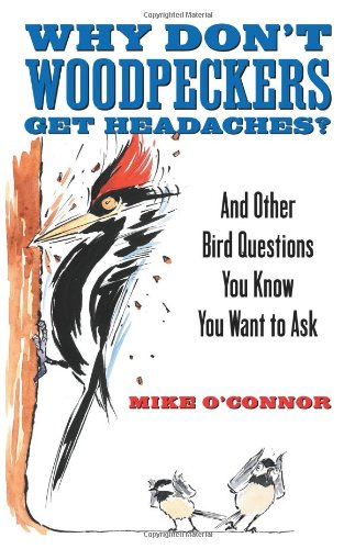 Why Don't Woodpeckers Get Headaches?: And Other Bird Questions You Know You Want to Ask