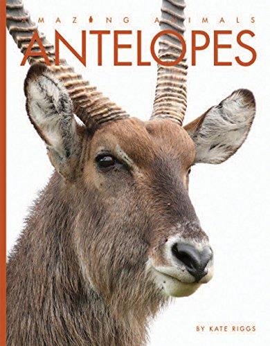 - Antelopes (Amazing Animals)