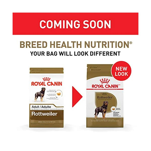 Royal Canin Breed Health Nutrition Rottweiler Adult Dry Dog Food 2