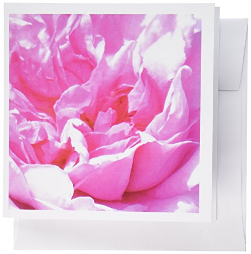 (3dRose Pink flower petals Floral closeup photo Pretty rose peony abstract folds - Flowers - Greeting Cards, 6 x 6 inches, set of 12 (gc_112958_2))