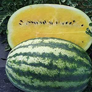 (FWBD)~BLACK DIAMOND/YELLOW FLESH WATERMELON~Seeds!!!!~Super Tasting!