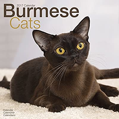 Burmese Cat Calendar - Calendars 2016 - 2017 Wall Calendars - Cat Calendar - Animal Calendar - Burmese Cats 16 Month Wall Calendar by Avonside