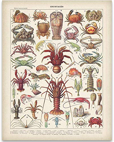 French Crustaceans - 11x14 Unframed Art Print - Great Beach House Wall Decor Under -