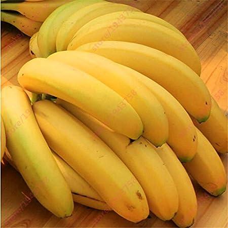 200 PC semillas de plátano, árboles frutales enanos, el sabor de la leche, semillas al aire libre perenne fruta para plantas de jardín: Amazon.es: Hogar