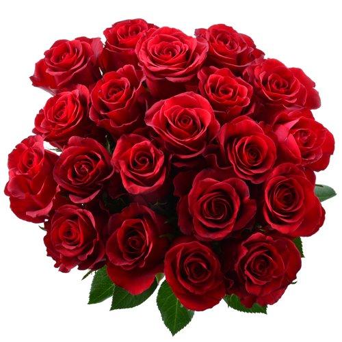 Blumensversand Blumen Pur Rote Rosen Aus Afrika 20 Stuck Rote
