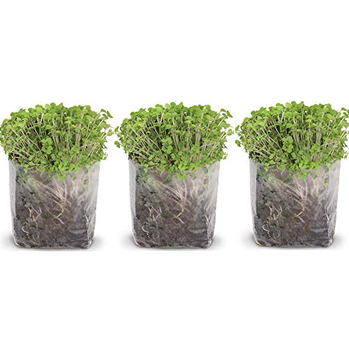 Pop Up Microgreens Kit (Broccoli) - Just Add Water and Seed. Perfect Size, a Quick, Smart, Nutritious Meal. Includes Fiber Soil in a Bag, Broccoli Seed. Super Health Benefits, Easy Grow/Delicious.