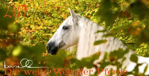 pferde-panoramakalender-2009-mohn-media