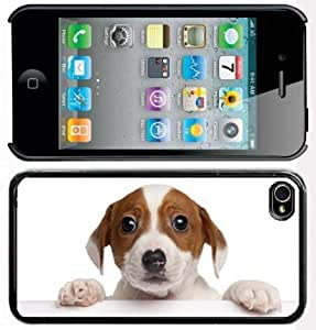 Apple iPhone 4 4S 4G Black 4B108 Hard Back Case Cover Color Cute Jack Russell Terrier Puppy with Paws wangjiang maoyi