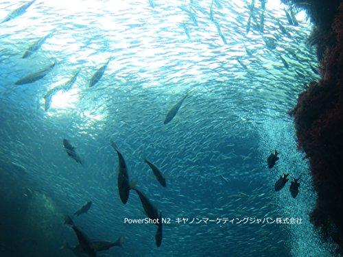 Canon デジタルカメラ PowerShot N2 自分撮りモード搭載 PSN2