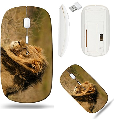 Liili Wireless Mouse White Base Travel 2.4G Wireless Mice with USB Receiver, Click with 1000 DPI for notebook, pc, laptop, computer, mac book IMAGE ID: 6758618 Big male African lion - Panthera African Lion Leo