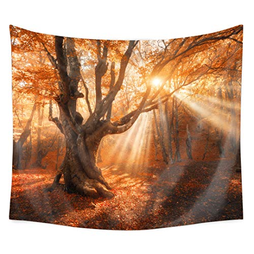 - QCWN Autumn Fall Forest Trees Tapestry Wall Hanging Golden Sunshine Sunset Scenery Nature Plant Leaves Art Decor Blanket for Bedroom Room Dorm (Autumn Tree, 78Wx59L)
