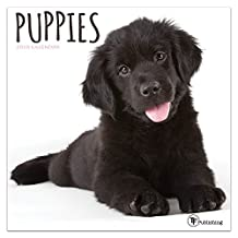 Puppies 2019 Calendar