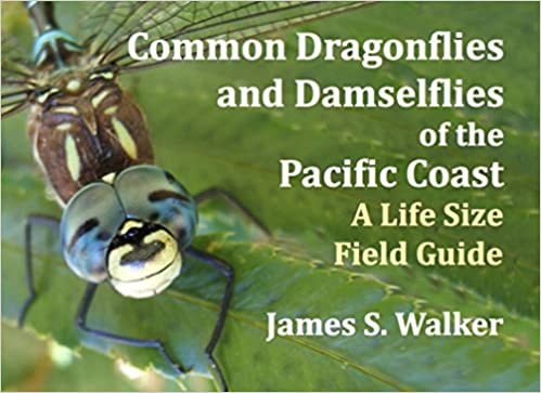 ?EXCLUSIVE? Common Dragonflies And Damselflies Of The Pacific Coast: A Life Size Field Guide. junio cambiado received still Rincon Leitch ambito