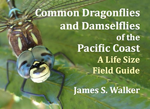 Common Dragonflies and Damselflies of the Pacific Coast: A Life Size Field Guide