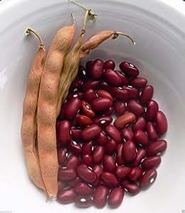 30 Organic Bean,Hopi Red pole Kidney Beans. Organically Grown Heirloom Seeds