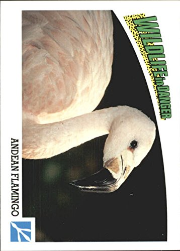 1992 Wildlife in Danger #61 Andean Flamingo - (Andean Flamingo)