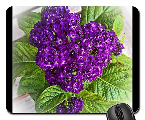 Mouse Pad - Vanilla Flower Heliotrope Potted Plant Flower Purple ()