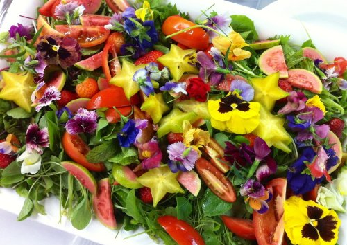 Edible Flower Mix of 12 Varieties 500+ Seeds Very Colorful Free Shipping