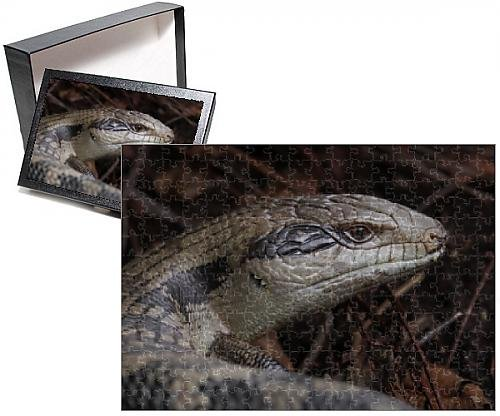 photo-jigsaw-puzzle-of-handsome-blue-tongue-lizard