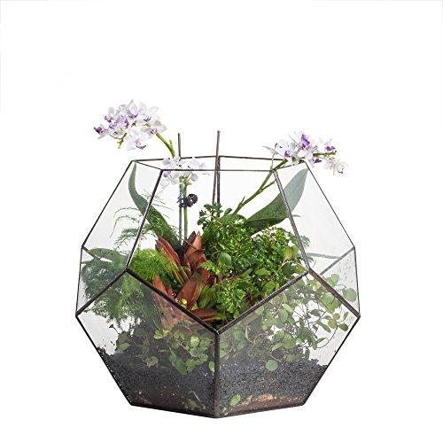 NCYP 10.2 inches Large Glass Terrarium Home Geometric Decor Box Tabletop Pentagon Ball Shape Open Planter Pot for Succulents Plants Flower Fern Moss Wardian Case Centerpiece