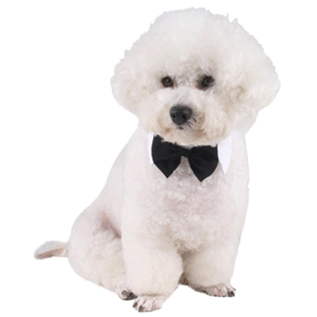 Voberry Formal Pet Bow Tie and Collar Gentleman (S, White)