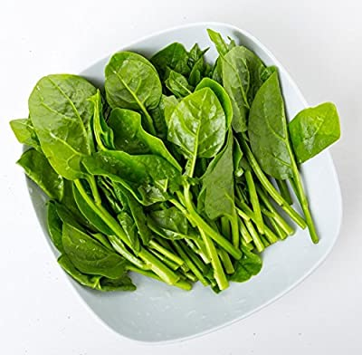 100 Malabar Spinach Green, Organic Seeds