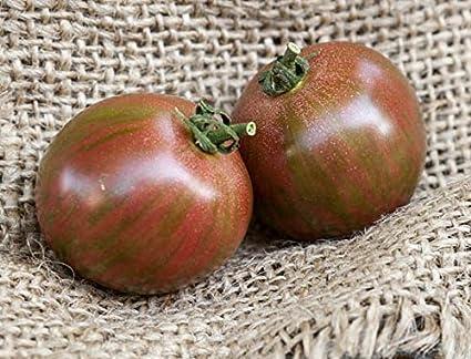 2 Purple Bumble Bee Live Rare Heirloom Tomato Plants