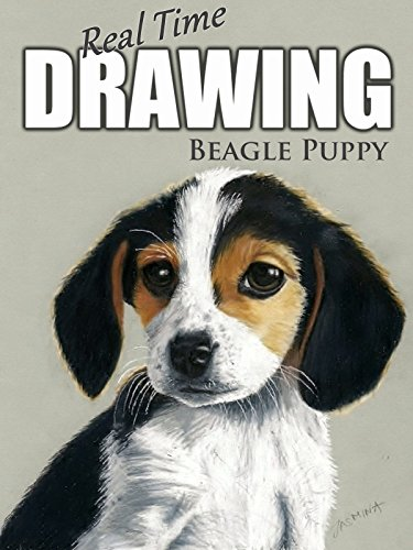 Real Time Drawing: Beagle Puppy by