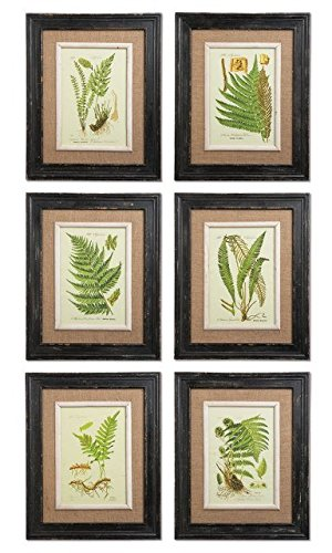 Framed Fern Prints, Set of 6