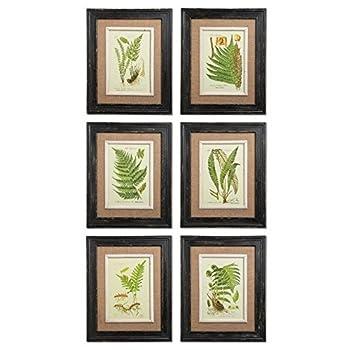 Framed Fern Prints, Set of 6