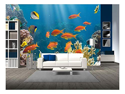 wall26 - Coral and Fish in The Red Sea.Egypt - Removable Wall Mural | Self-Adhesive Large Wallpaper - 100x144 inches